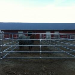 5-rail-farm-gate